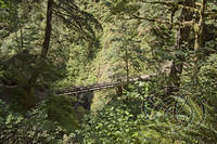 Oneonta Creek Footbridge